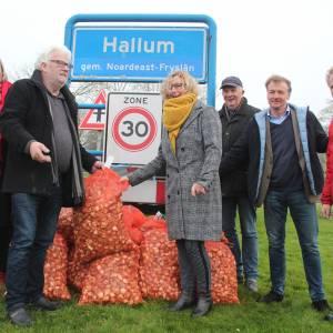 Tulpenbollen voor Bruisend Hart van Hallum